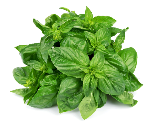 Basil leaves are delicious in salads, pesto sauce, and even desserts