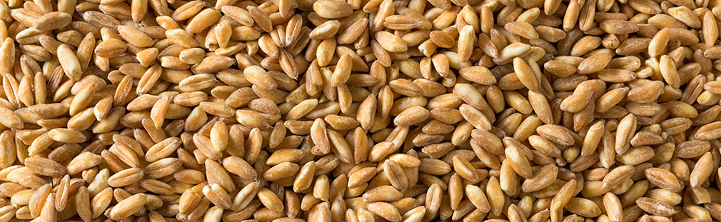 Freekeh and gut health