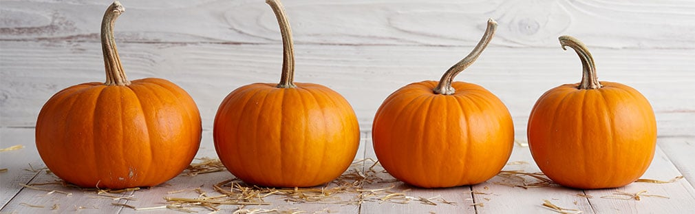 Pumpkin season is back earlier than ever in the food industry.